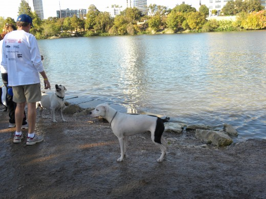 Off Leash Park Lady Bird Lake Austin TX