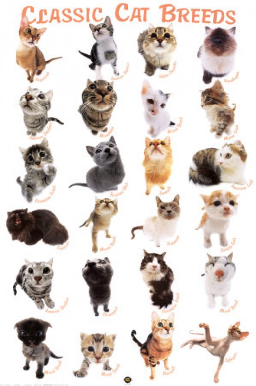 different kinds of cats wallpaper