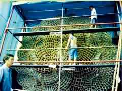 CRAFTSMEN in the City of San Fernando in Pampanga prepare one of eight giant lanterns that will compete in the 'Ligligan Parul' Festival on Dec. 21. A much bigger one is being considered for the Guinness Book of World Records.
