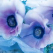 Cerenzia profile image