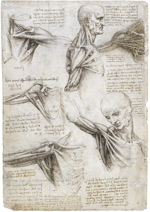 Leonardo Da VInci Mechanics of Man Collection