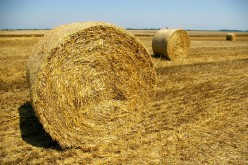 How Hay Is Made
