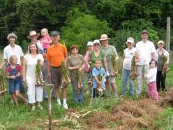 Shareholders joined together to make short work of the garlic harvest