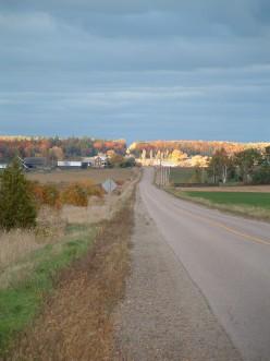 A Fall Walk