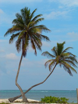 Fly to Belize City From the US