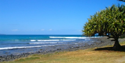 Pandanus palm with the long right-hander off the Point.