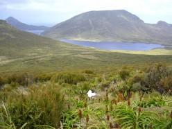 Campbell Island, New Zealand