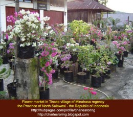 Flower market in Tincep village of Minahasa regency in the Republic of Indonesia