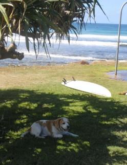It's a dog's life at Crescent Head