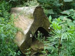 Bit log in the rainforest