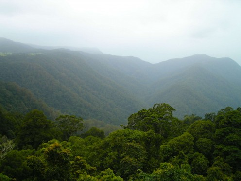 View from the Sky Bridge - Dorrigo World heritage Rainforest