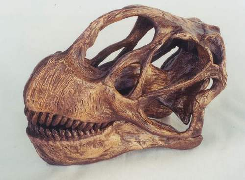 The skull of Camarasaurus.