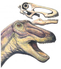 The face of Rapetosaurus.