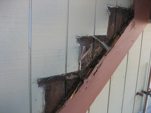 Dry rot in deck stairs spreading to other wood