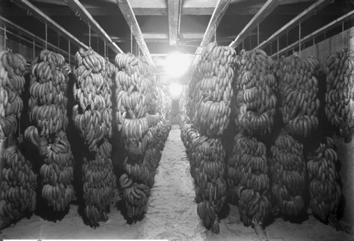 Ryan and Virden Fruit Company's Banana Room about 1913 in Salt Lake City Utah. [public domain]