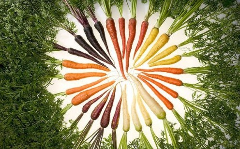 Popular image of a variety of colors and textures among carrots.