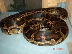 Basic Python care