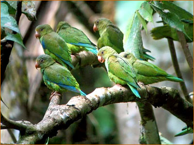 If you love exotic birds, you will love eco-tourism and the ability to see these birds and more in their undisturbed and natural setting.