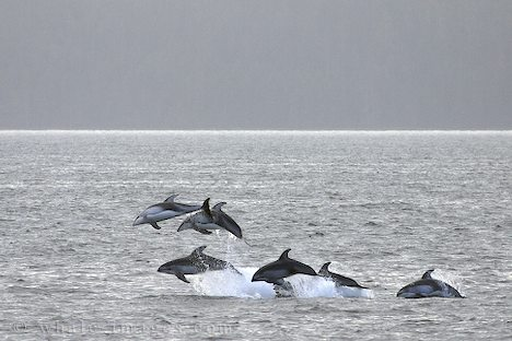 The open ocean offers wonderful experiences for eco-tourism. Imagine seeing this from a large sailing ship.
