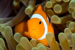 Tropical Fish Diseases - Treating and Understanding Tumors and Growths