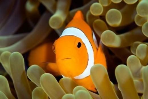 Tropical Fish Diseases