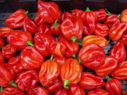 Scotch bonnet peppers. They also come in yellow and green as well. The red is the hottest of the three. Then the yellow, then the green.