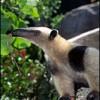 AnteaterLover profile image