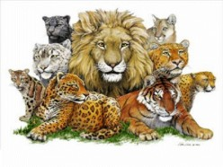 Know About Big Cats