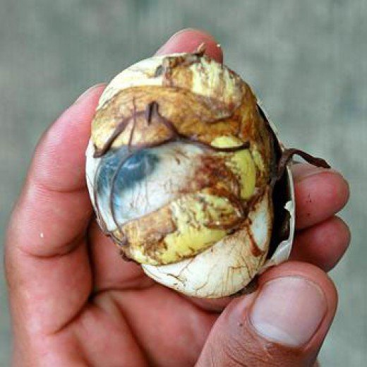 balut egg - a delicacy in Asia esp. Philippines, Vietnam, Cambodia and China