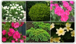 Introduction to Shrubs