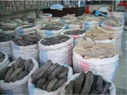 An assortment of sea cucumbers.