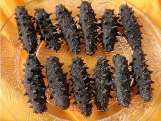 Thorny Sea Cucumbers