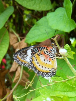 Butterfly Farm Penang