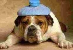 He needs a hair of the dog! photo credit tothewindmills.wordpress,com