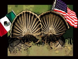 American and Mexican Flag Flying Turkey's
