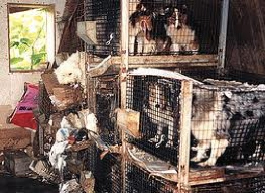 Kennels at a Puppy Mills