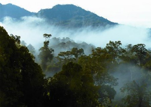 Danum Valley Rainforest, Sabah.