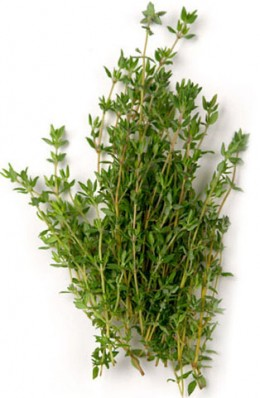 Thyme used for cooking
