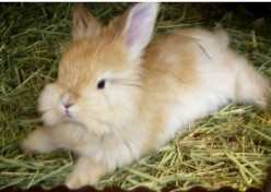 Growing Your Own Rabbit Food