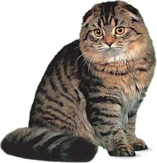 cat rescue delaware