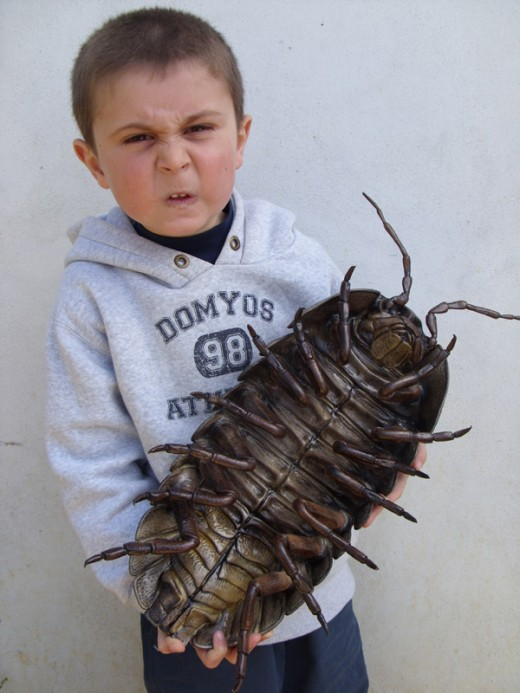 Isopods Armadillidium Vulgare