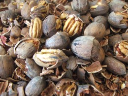 Shelled, Raw Pecans Keep Well If Properly Stored