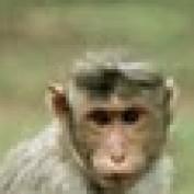 banzaradiwana profile image