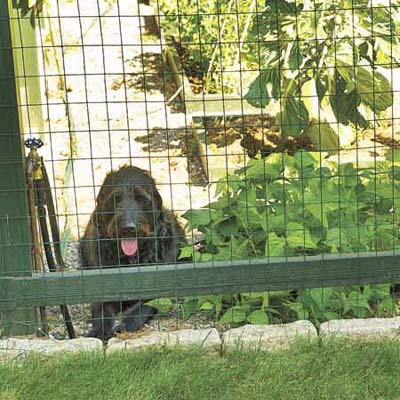 If you opt to put a fence around your garden, make sure that it is tall enough that your dog or other animals cannot jump into the garden.