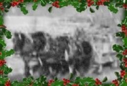 Horse-drawn Wagon Ride at the Christmas tree farm