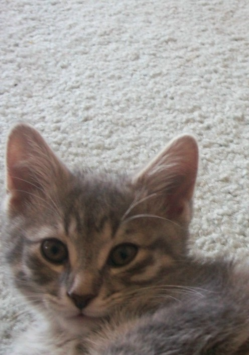 One of the kittens we gave away: Misha. She looks a lot like her Mom.
