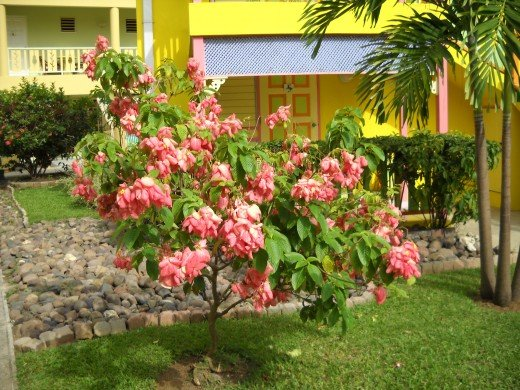 Negril, Jamaica has the most lush and gorgeous flowers I have ever seen!
