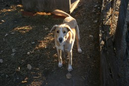 Lady, found wandering the country roads with torn up feet and very thin.