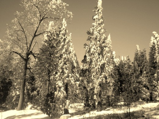 This sepia snow picture of the San Bernardino Mountains is one of which I am very fond.