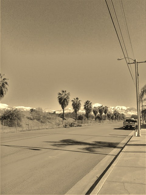 Here is a picture I took of more palm trees with snow capped mountains in the background.  This sepia photograph looks very much like a Southern California image out of the 1920s or 1930's.